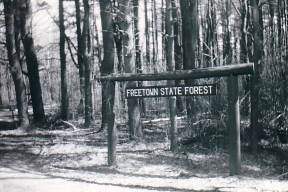 freetownforest